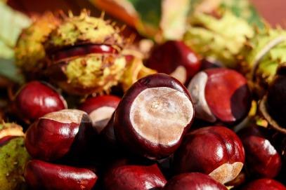 chestnut-1710748_960_720.jpg