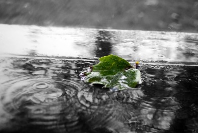green-84649_960_720.jpg