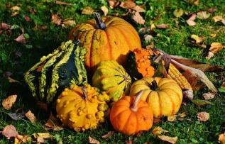 pumpkins-1712841_960_720.jpg