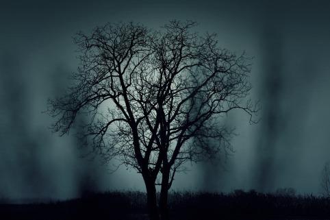 tree-407256_960_720.jpg