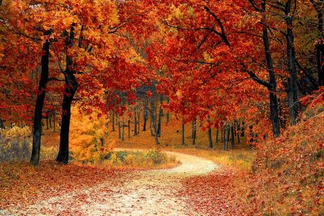 fall-1072821_960_720.jpg
